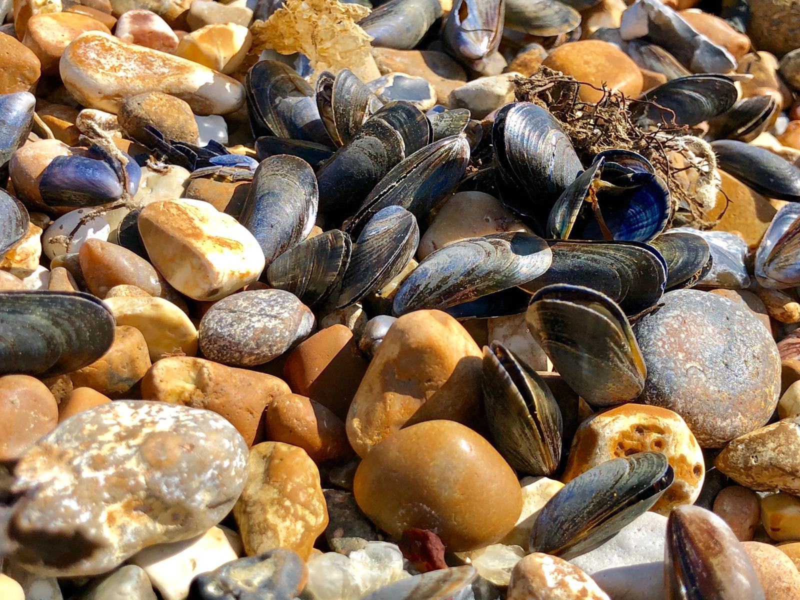 Down on Shoreham Beach
